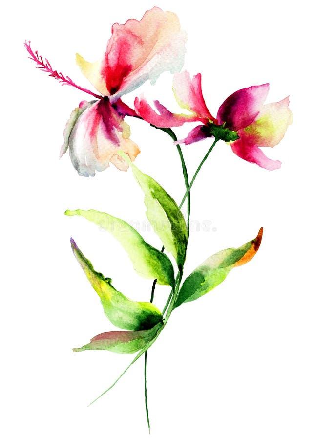 Ibisco con i fiori di Cosmea illustrazione vettoriale
