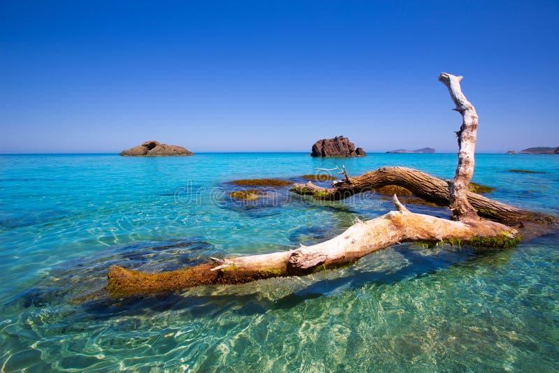 Ibiza Aigues Blanques AguasBlancas strand på Santa Eulalia royaltyfri bild