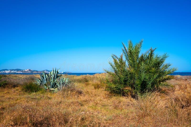 Ibiza Playa d En Bossa beach in Balearic Islands. Ibiza Playa d En Bossa beach in Sant Josep of Balearic Islands stock photography