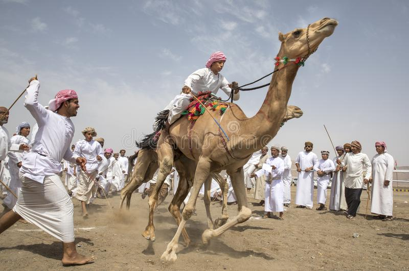 Men on camels at the start of a race stock images