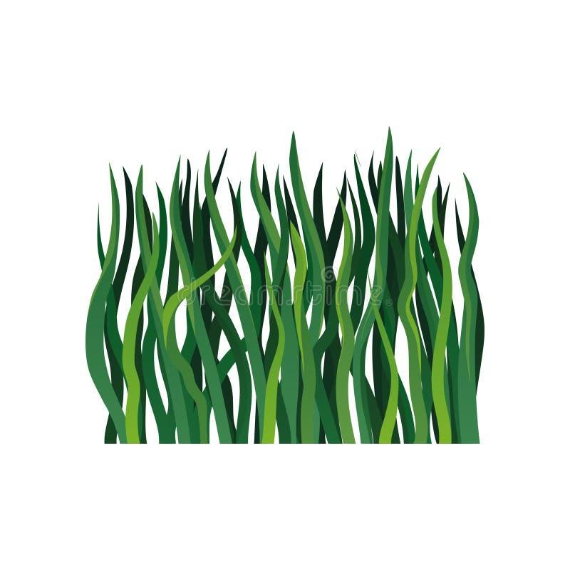 Icône colorée de vecteur de longue herbe verte Élément de saison de ressort ou d'été Frontière de fines herbes décorative illustration libre de droits