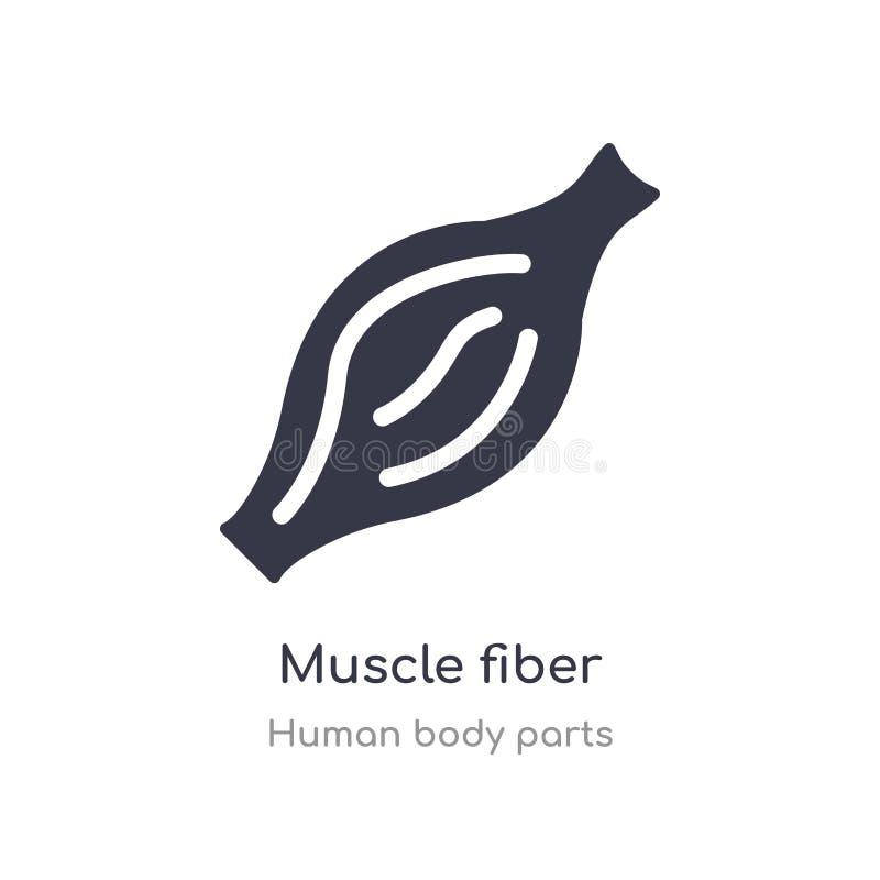 icône d'ensemble de fibre musculaire ligne d'isolement illustration de vecteur de collection de pi?ces de corps humain fibre musc illustration stock