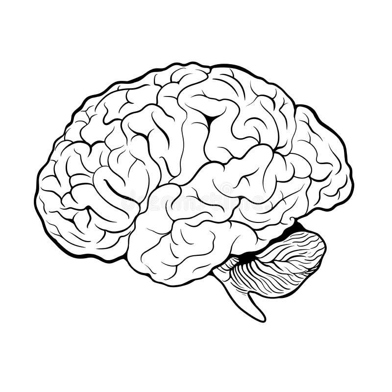 Icône d'esprit humain dans le style d'ensemble d'isolement sur le fond blanc Carte binaire d'actions de symbole d'organes humains illustration stock