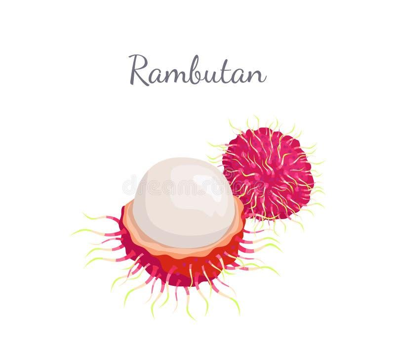 Icône d'isolement par vecteur juteux exotique de fruit de ramboutan illustration de vecteur
