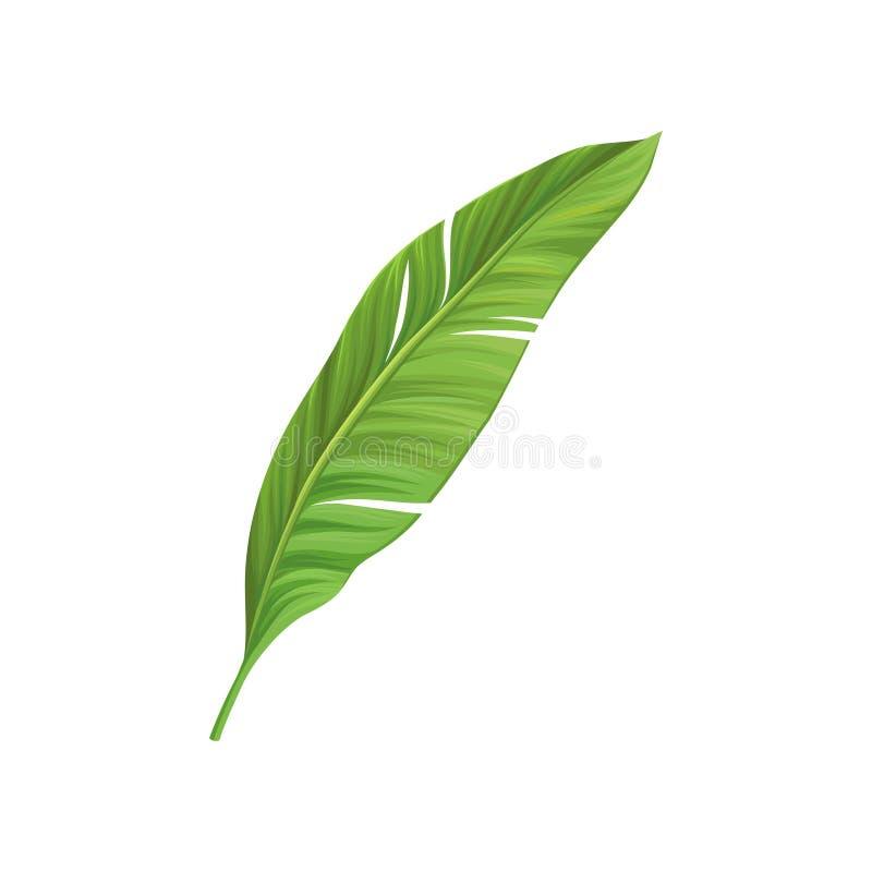 Icône de bande dessinée de feuille verte de palmier de banane Élément coloré de conception graphique pour la copie, le modèle ou  illustration stock