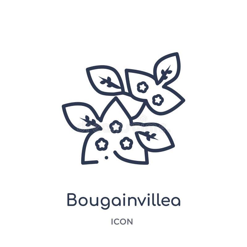 Icône de bouganvillée de collection d'ensemble de nature Ligne mince icône de bouganvillée d'isolement sur le fond blanc illustration stock