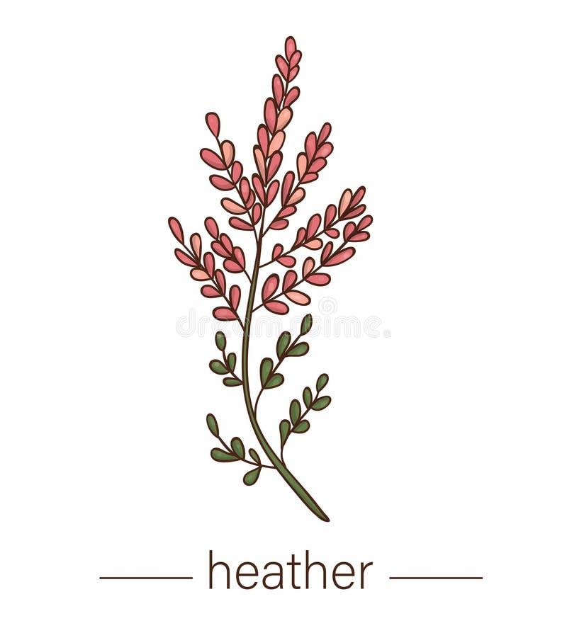 Icône de bruyère de vecteur Illustration colorée de fleur sauvage illustration de vecteur