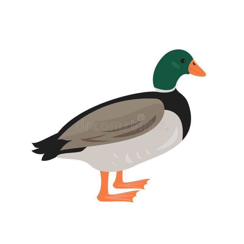 Icône de canard de bande dessinée sur le fond blanc illustration libre de droits