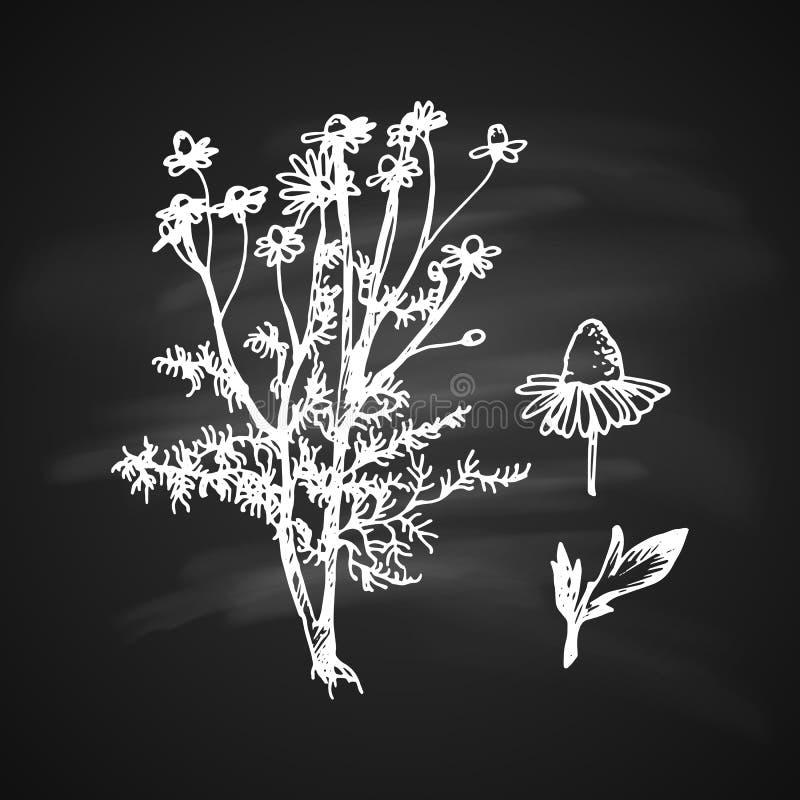 Icône de Matricaria illustration de vecteur