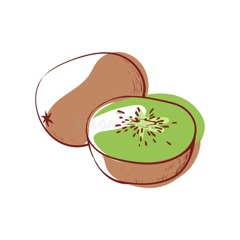 Icône de vecteur d'isolement par kiwi mûr illustration stock