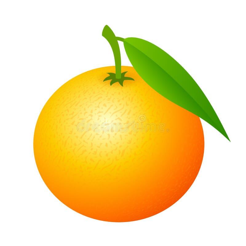 Icône de vecteur de fruit de mandarine illustration de vecteur