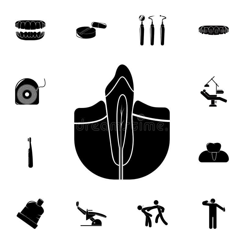 icône dentaire de racine Ensemble détaillé d'icônes dentaires Signe de la meilleure qualité de conception graphique de qualité Un illustration libre de droits