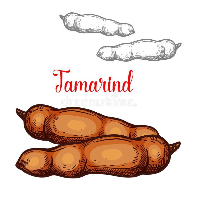 Icône exotique de fruit de croquis de vecteur de tamarinier illustration libre de droits