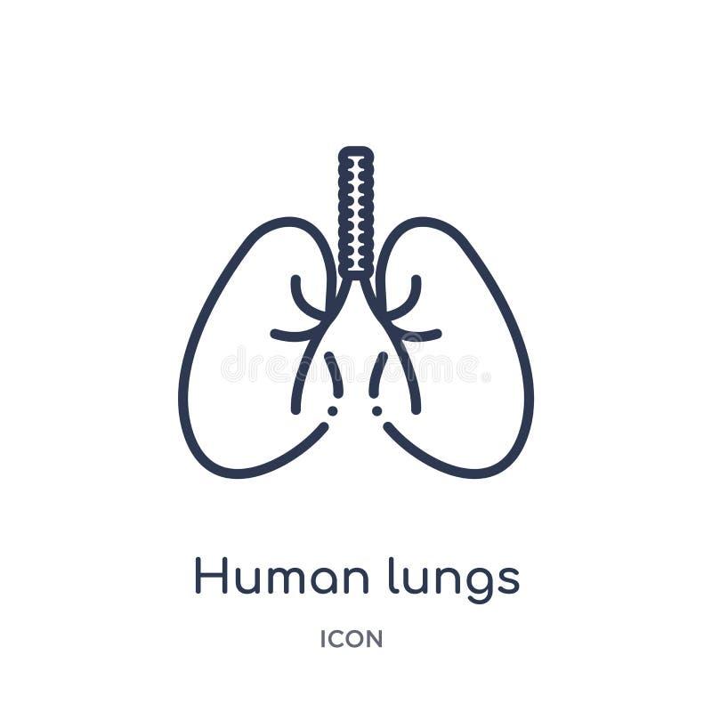 Icône humaine linéaire de poumons de collection d'ensemble de pièces de corps humain Ligne mince icône humaine de poumons d'isole illustration libre de droits