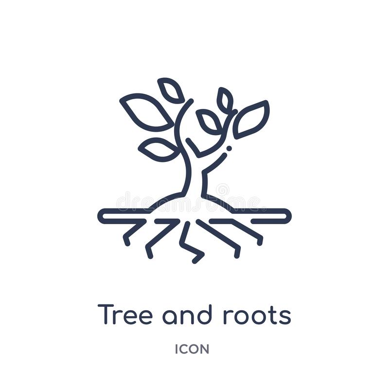 Icône linéaire d'arbre et de racines de collection d'ensemble d'écologie Ligne mince arbre et vecteur de racines d'isolement sur  illustration de vecteur