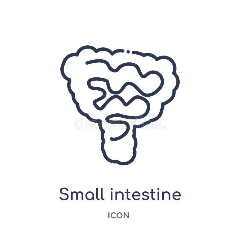 Icône linéaire d'intestin grêle de collection d'ensemble de pièces de corps humain Ligne mince icône d'intestin grêle d'isolement illustration libre de droits