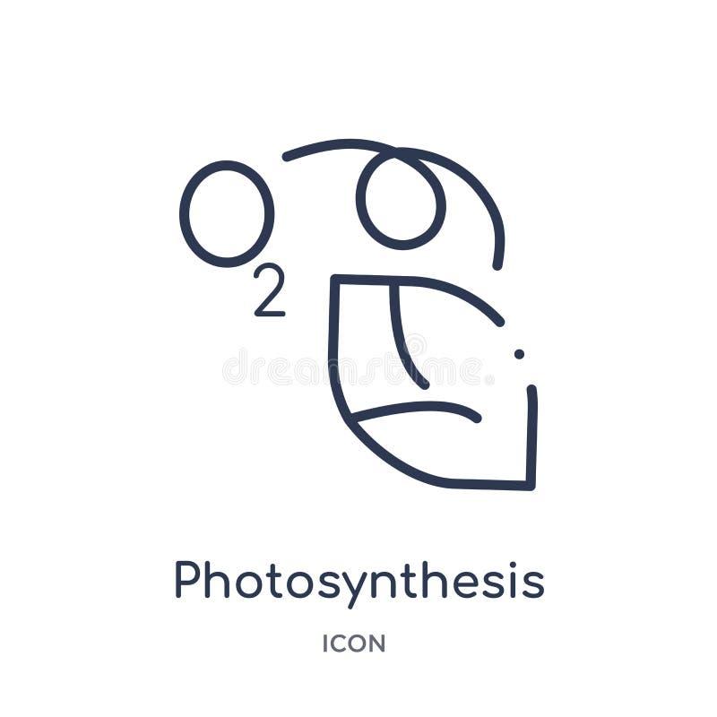 Icône linéaire de photosynthèse de collection d'ensemble d'éducation Ligne mince vecteur de photosynthèse d'isolement sur le fond illustration stock