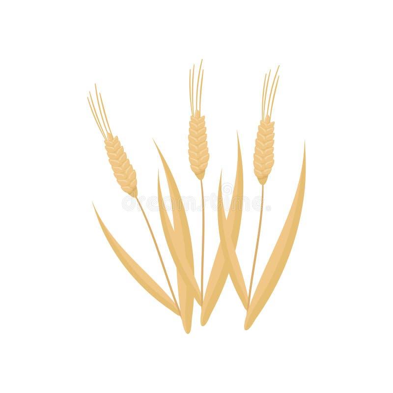 Icône plate de vecteur de bande dessinée de trois épillets secs de blé Usine de céréale Culture agricole organique Agriculture du illustration de vecteur