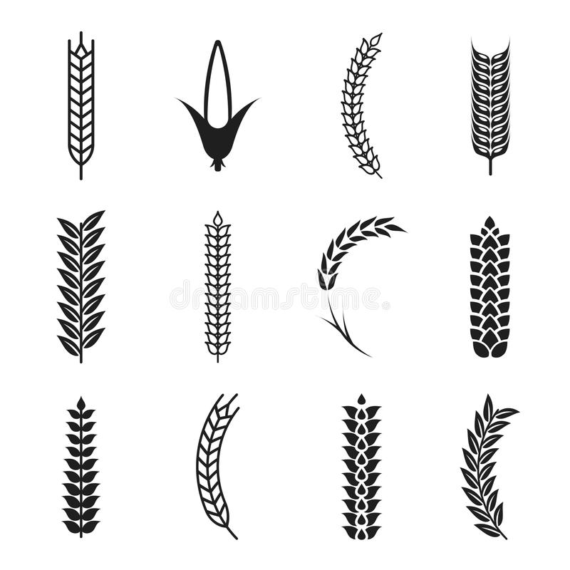 Icônes d'oreilles de blé de vecteur Grains d'avoine et de blé Icône de maïs illustration stock