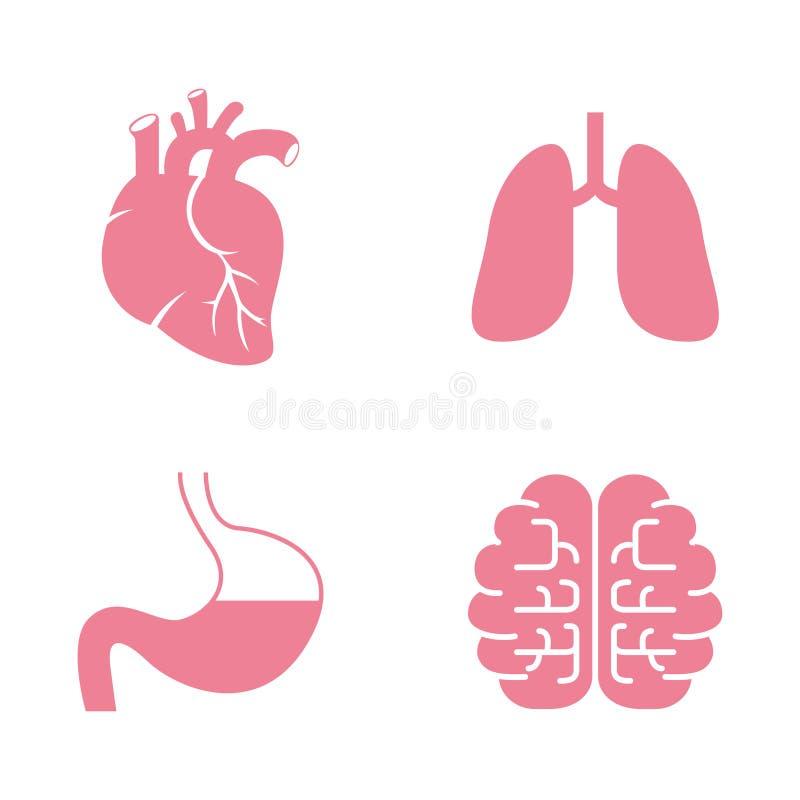 Icônes des organes humains Coeur, poumons, estomac, cerveaux illustration de vecteur