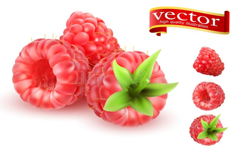 Icônes douces de vecteur du fruit 3d de framboise réglées Berry Raspberries Icon Set réaliste Collection de framboises mûres illustration de vecteur