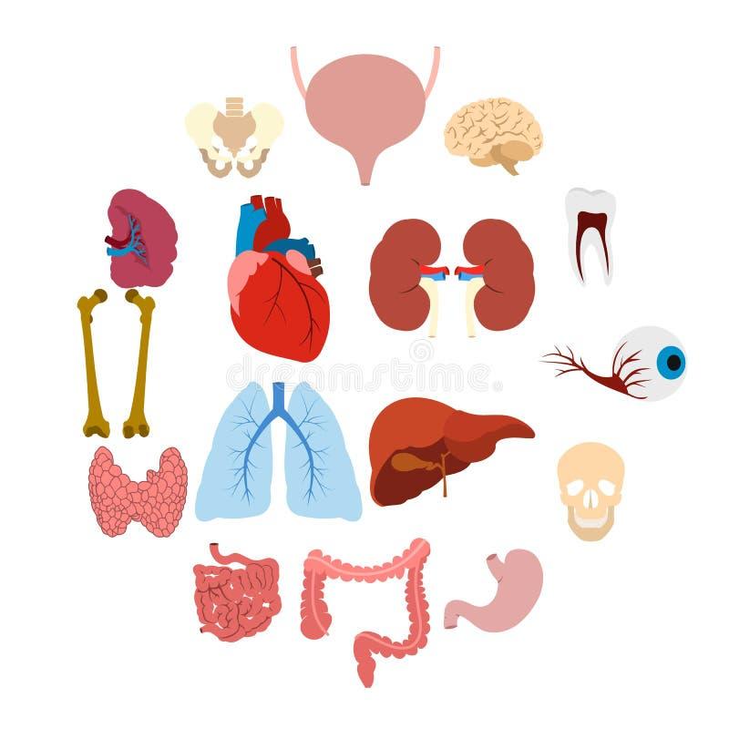 Icônes plates d'organes internes illustration stock