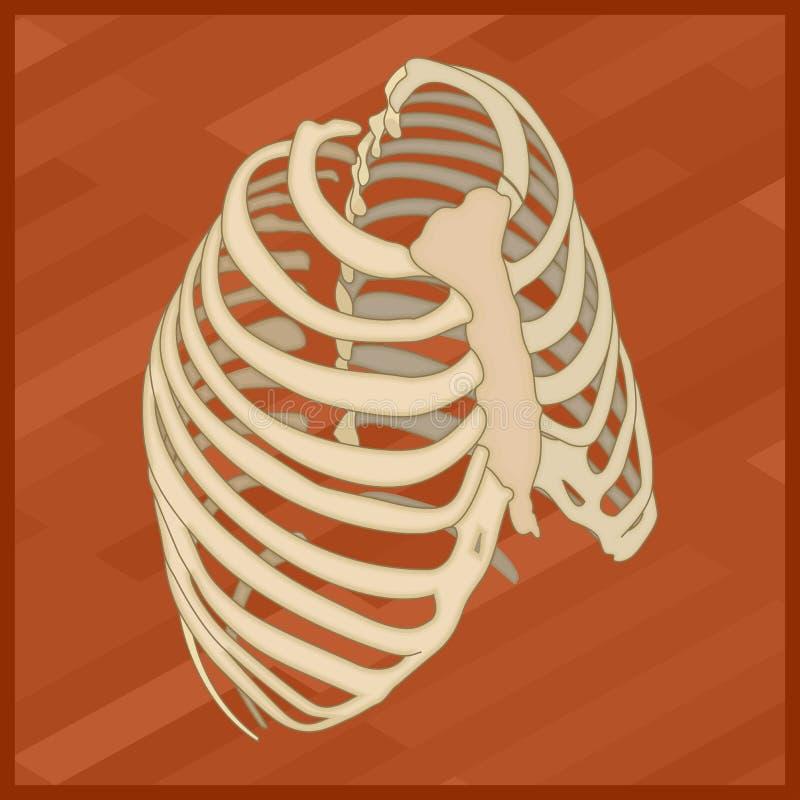 Icône isométrique plate de thorax humain illustration de vecteur