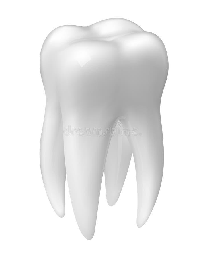 Icône molaire de dent de vecteur illustration stock