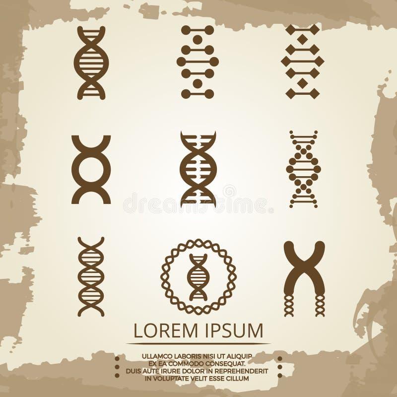 Icônes de vecteur d'ADN - l'affiche de biologie de vintage avec de l'ADN se développe en spirales illustration stock