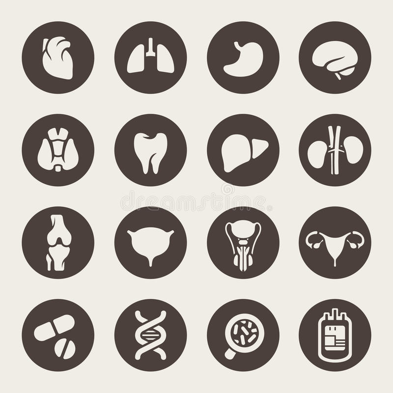 Icônes médicales. Organes humains illustration stock