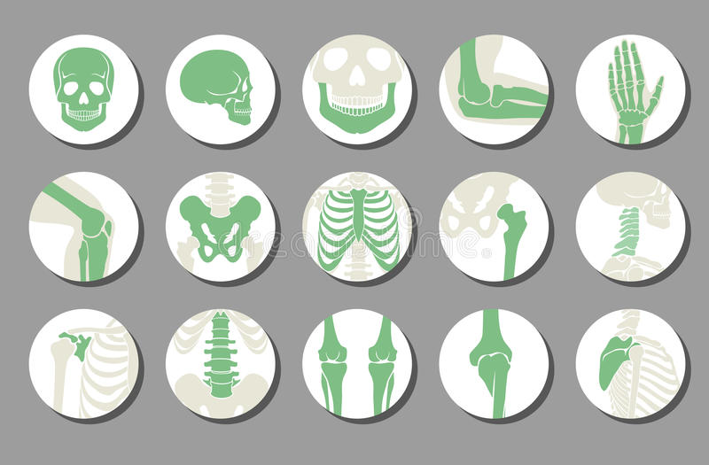 Icônes orthopédiques et d'épine de vecteur illustration de vecteur