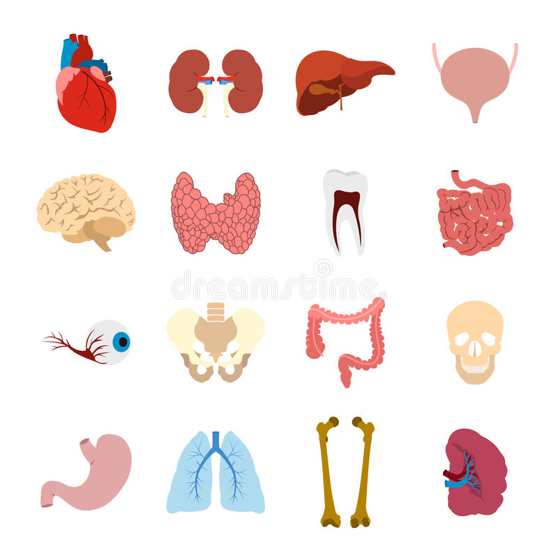 Icônes plates d'organes internes illustration libre de droits