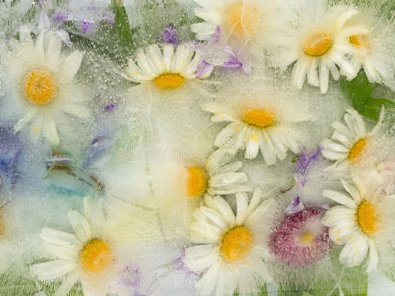 Ice abstraction with chamomile flowers royalty free illustration