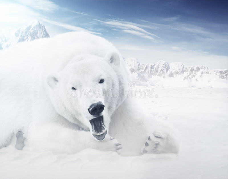 Ice Bear. In mountains at sunny day stock photography