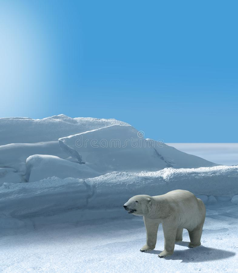 Ice Bear Hunting Polar Arctic Region royalty free stock image
