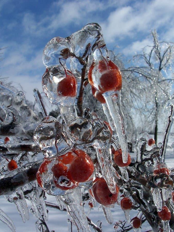 Ice Berries royalty free stock photos