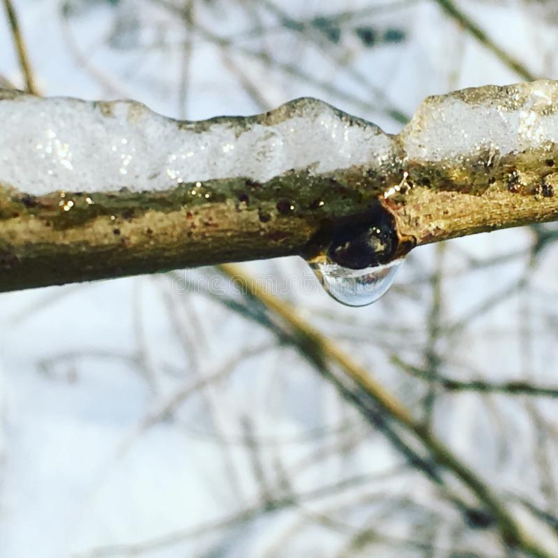 Ice on a branch with an ice drop royalty free stock photo
