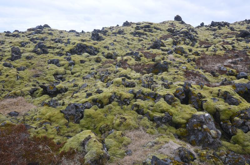 Ice capped landscape with volcanic rocks and moss stock image