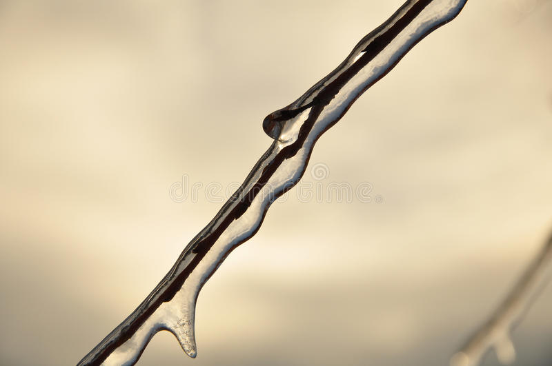 Ice-covered Branches Of Tree Stock Photos