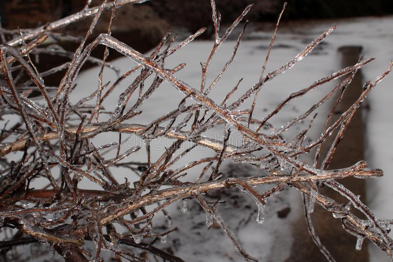 Ice covered tree branches after freezing rain royalty free stock photography