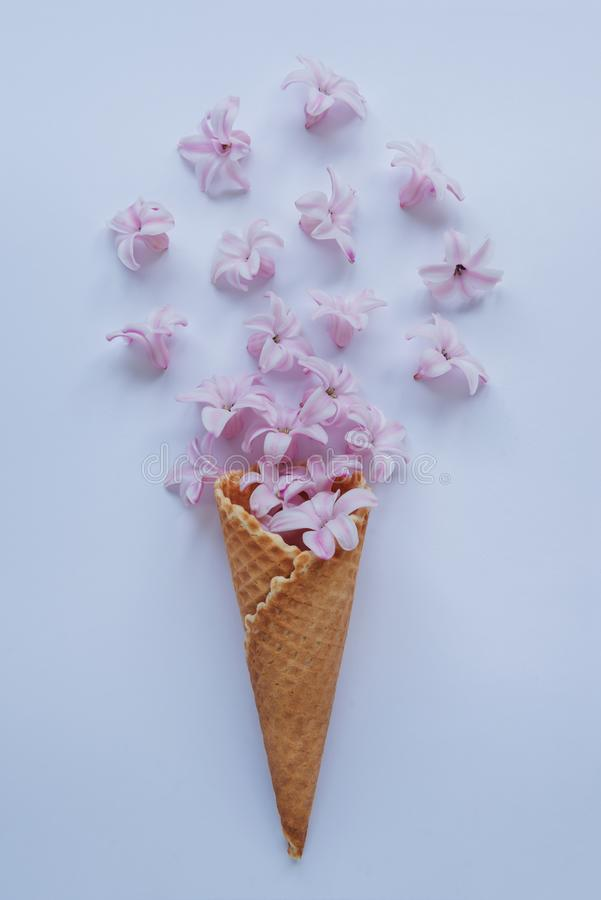 Ice cream horn with pink hyacinth on a blue background. For Happy Mother`s Day, Women`s Day or Birthday greeting card royalty free stock image