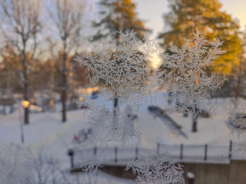 Ice crystal on window glass shield with nice sunny background on pine tree royalty free stock image