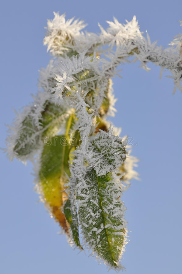 Download Ice crystals stock image. Image of leaf, branch, sunny - 12051233