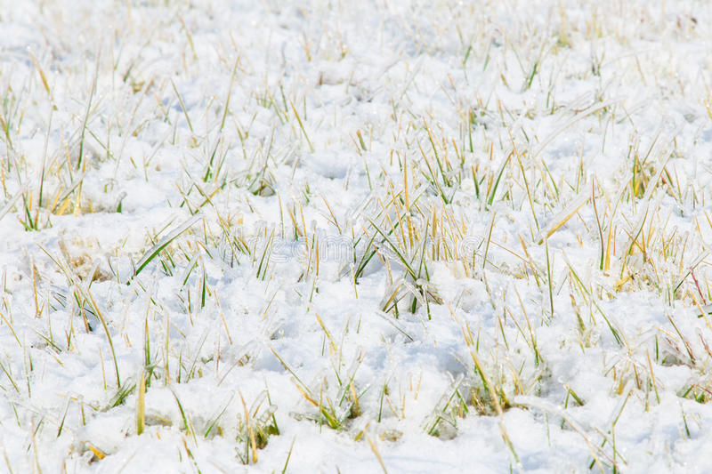 Ice crystals lawn stock photo