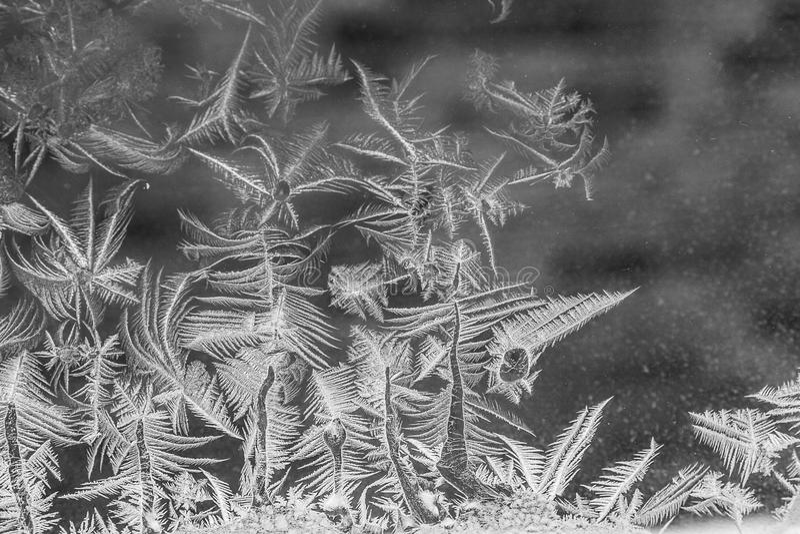 Download Ice flower background stock photo. Image of pattern, illuminated - 38709838