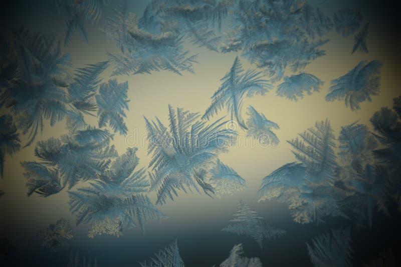 Ice flowers stock image