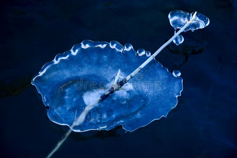 ICE FORMATION Jellyfish royalty free stock images