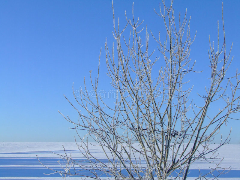 Ice fresh stock photography