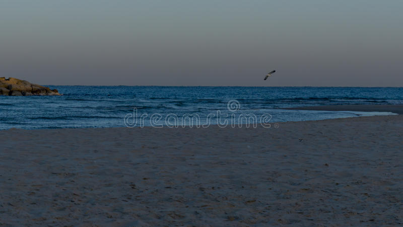 Ice gull in the morning in Herzliya. MorningView of Herzliya`s SeeView at 6am. Ice gull started to fly stock images
