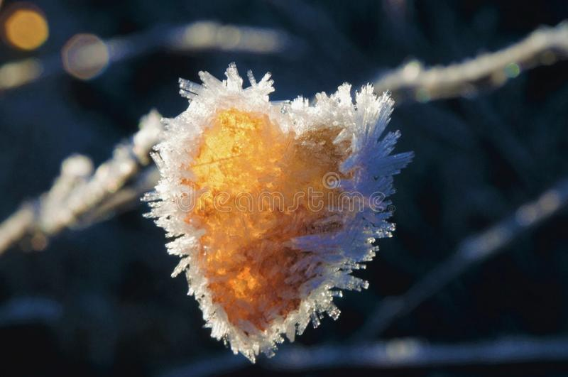 Ice heart royalty free stock photography